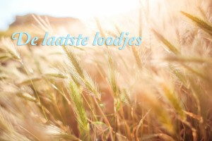blogfoto-blauw